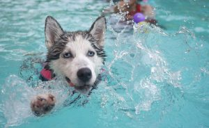 Можно ли купать собаку гелем для душа