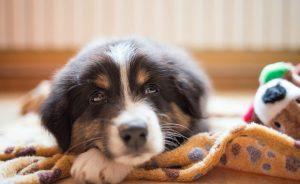 Успокаивающее для собаки стрижки