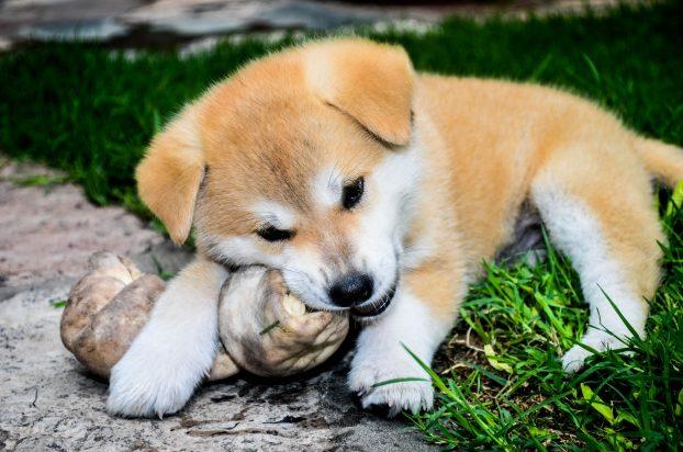 Японские клички для собак мальчиков