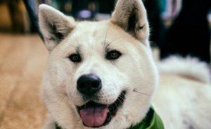 Японские клички для собак