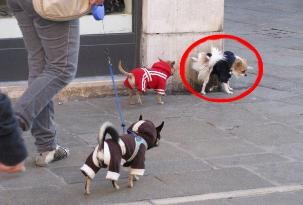 Где нельзя выгуливать собак и за что можно получить штраф