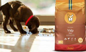 Корм для собак - какой выбрать