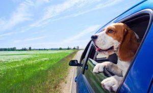Туризм с собакой: как путешествовать с питомцем