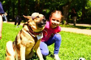Ежегодная выставка собак из приюта «Пора домой» - 2