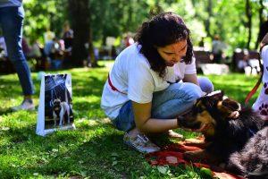 Ежегодная выставка собак из приюта «Пора домой» - 3