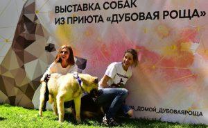 Ежегодная выставка собак из приюта «Пора домой»