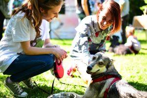 Ежегодная выставка собак из приюта «Пора домой» - 5