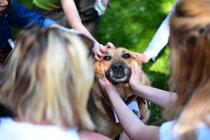 Ежегодная выставка собак из приюта «Пора домой» - 6