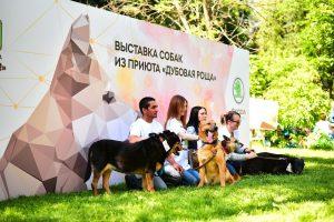 Ежегодная выставка собак из приюта «Пора домой» - 7