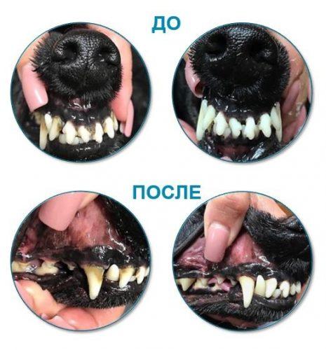 Зубы собаки до и после чистки налета средством PLATINUM OralClean + Care