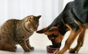 Можно ли корм для кошек давать собаке