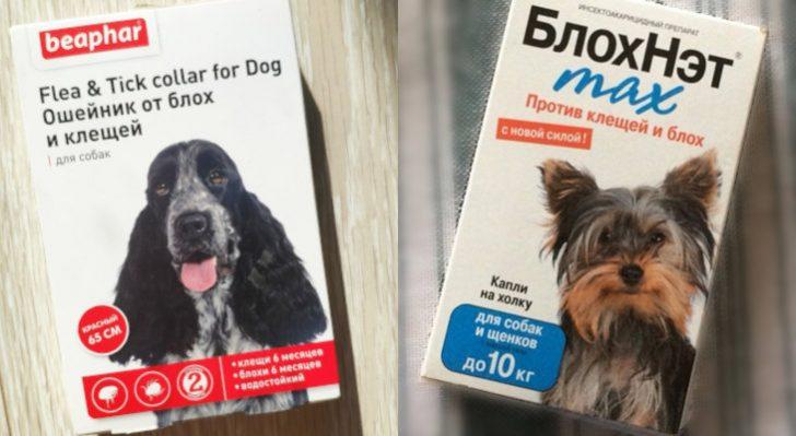 Эффективное средство от клещей для собак